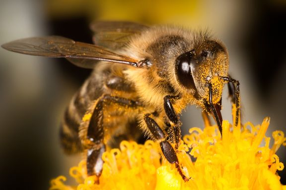Propolis Extract Could Be Key To Treating Cold Sores
