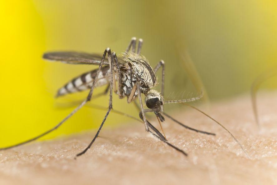 Malaria Outbreak In Greece: Worry Of Re-Establishment