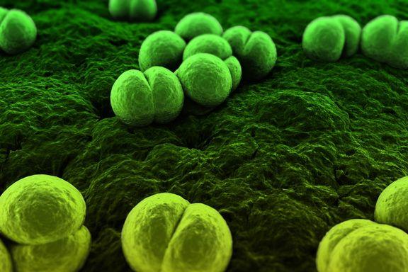 Meningitis Outbreak Update: 31 Deaths