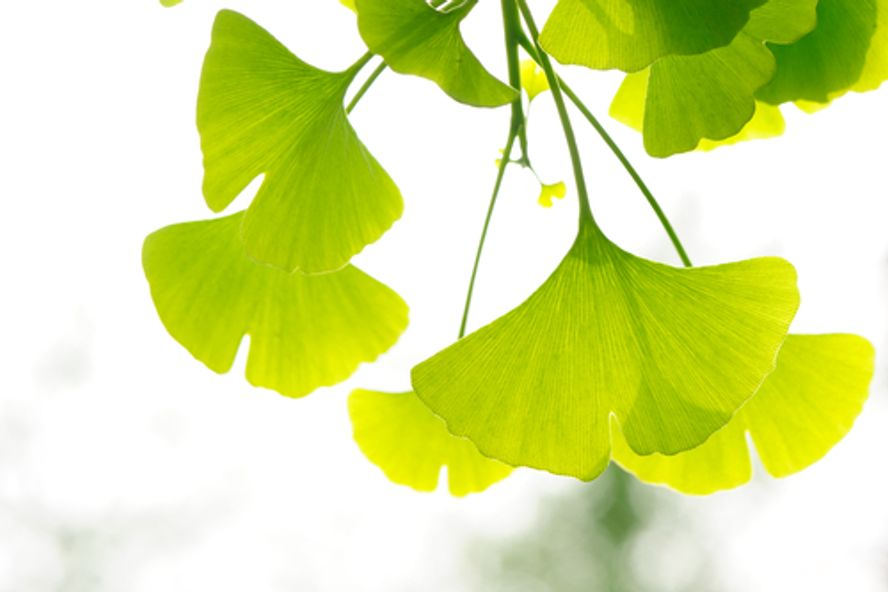 10 Rimedi Naturali per una Vescica Iperattiva