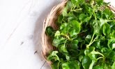 Reasons Springtime Greens Are Worth a Healthy Nibble