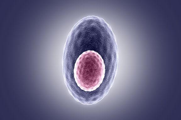 Las 10 Enfermedades Genéticas más Comunes