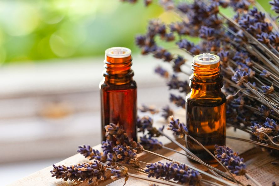 Effective Remedies for Itchy Bug Bites