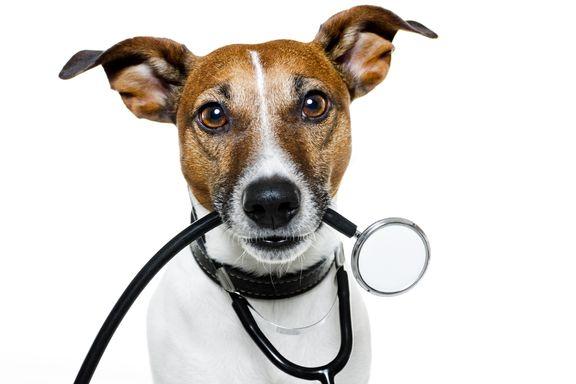 Doce razones convincentes de salud para tener un perro