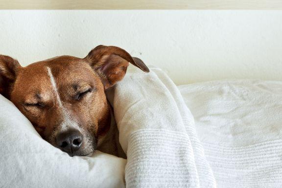 ¿Su mascota muestra síntomas de la enfermedad de Lyme?