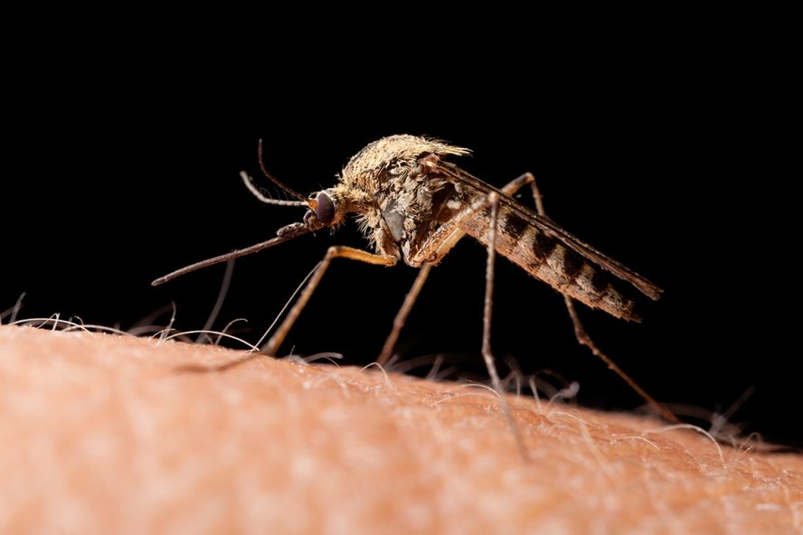 "Bill Gates Draws Attention to ""Mosquito Week"""