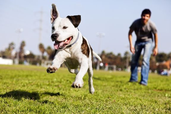 What to Know Before Visiting the Dog Park