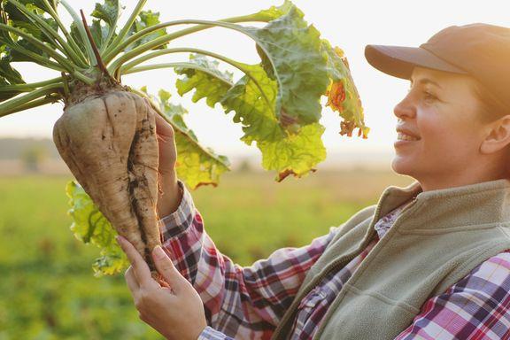 Most Common GMO Foods