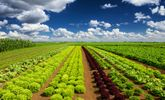 Top 10 Foods With Hidden Pesticides