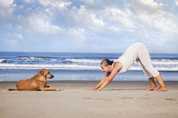 8 bienfaits moins connus du chien tête en bas