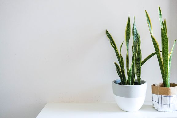 Houseplants That Clean And Promote Air Quality