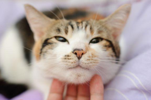9 Buone Abitudini che Possiamo Imparare dagli Animali