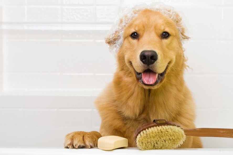 9 Cure Naturali per i Vostri Amici Animali