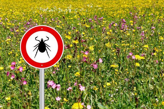 6 Ways to Avoid Summer Tick Bites While Hiking