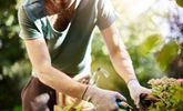 Ways to Prevent Injury When Gardening