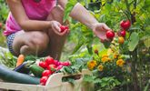 Healthy Reasons Why You Should Grow Vegetables