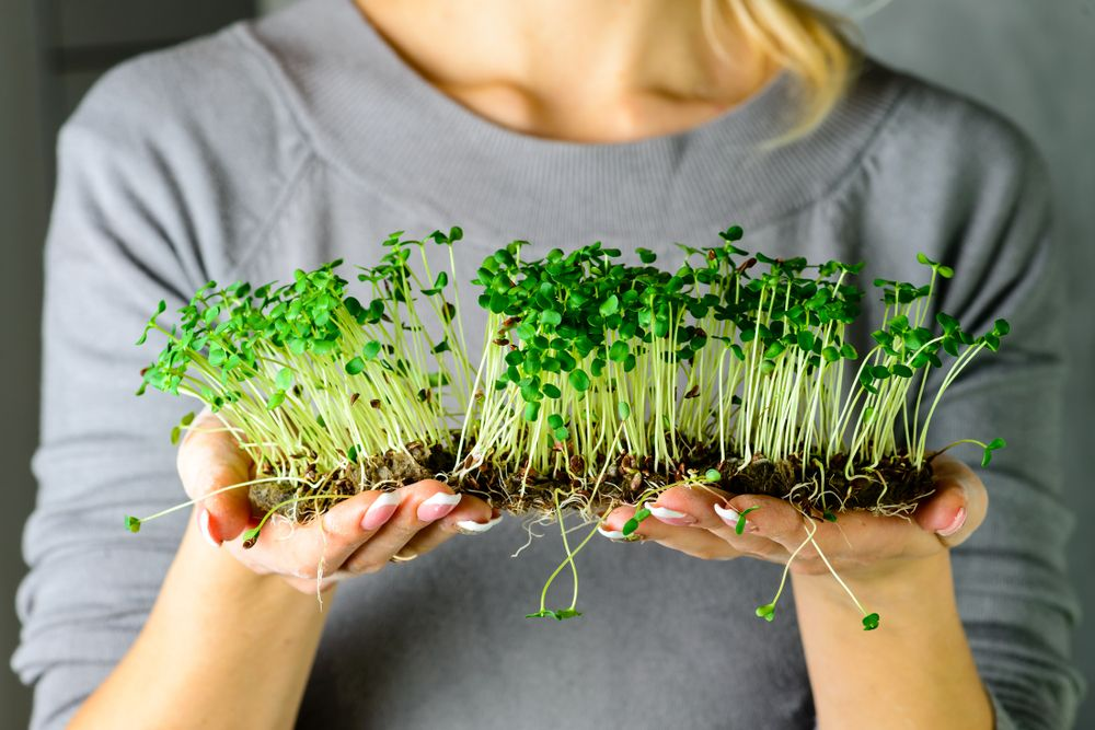 Are Sprouts Really Dangerous?