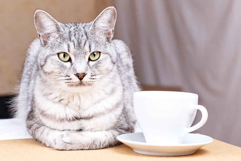 12 Household Items That Could Poison Your Pet