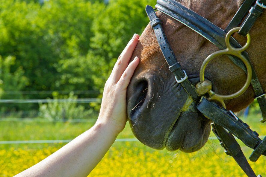10 bienfaits de la zoothérapie