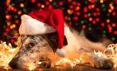 Tips for a Pet Friendly Holiday Season