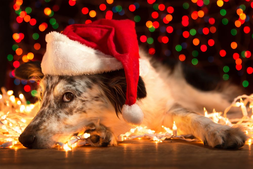 6 Tips for a Pet Friendly Holiday Season