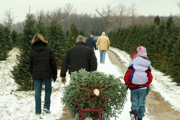 Siete formas de cuidar un árbol de Navidad auténtico