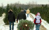 7 conseils pour prendre soin d'un vrai sapin de Noël