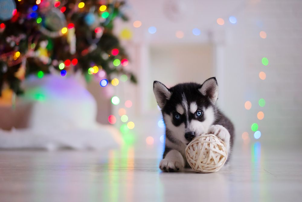 8 Not So Merry Holiday Pet Hazards