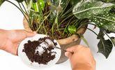 7 innovative Wege, um Lebensmittelabfälle zu verwenden