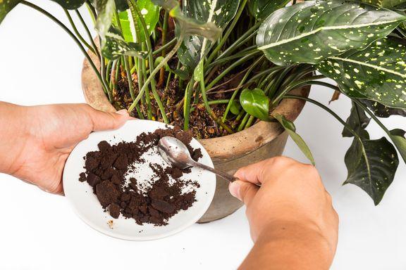 7 manières innovantes d'utiliser les déchets alimentaires