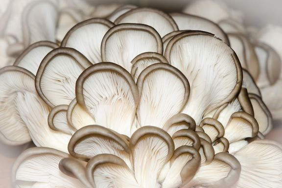 8 Types of Medicinal Mushrooms