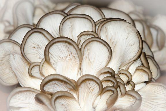 8 Types of Medicinal Mushrooms