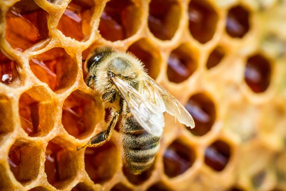 Sticky Facts on Health and Honeybees
