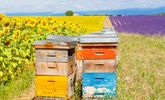 6 Sticky Facts on Health and Honeybees