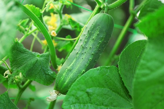 10 Homegrown Vegetables & Herbs with Serious Health Advantages
