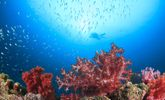 Immerse Yourself In These Facts About Healthy Oceans