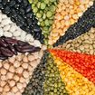 6 Reasons Why 2016 is the International Year of Pulses