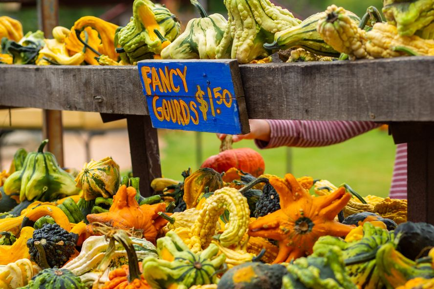Eco-Friendly Food Swaps for Greener Fall Eating