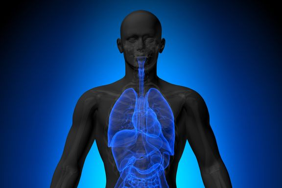 7 Organs and Body Parts You Probably Didn't Know You Have