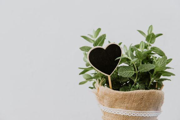 Fresh Herbs, What Are They Good For?