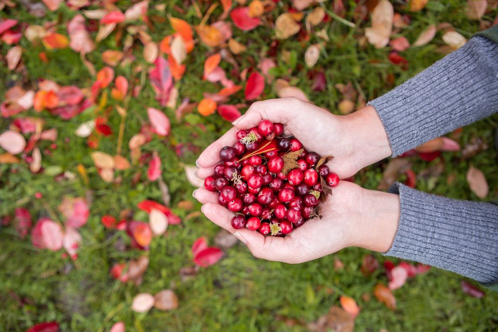Picking the Most Nutritious Fall Fruits and Veggies