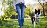Important Reasons to Walk the Dog