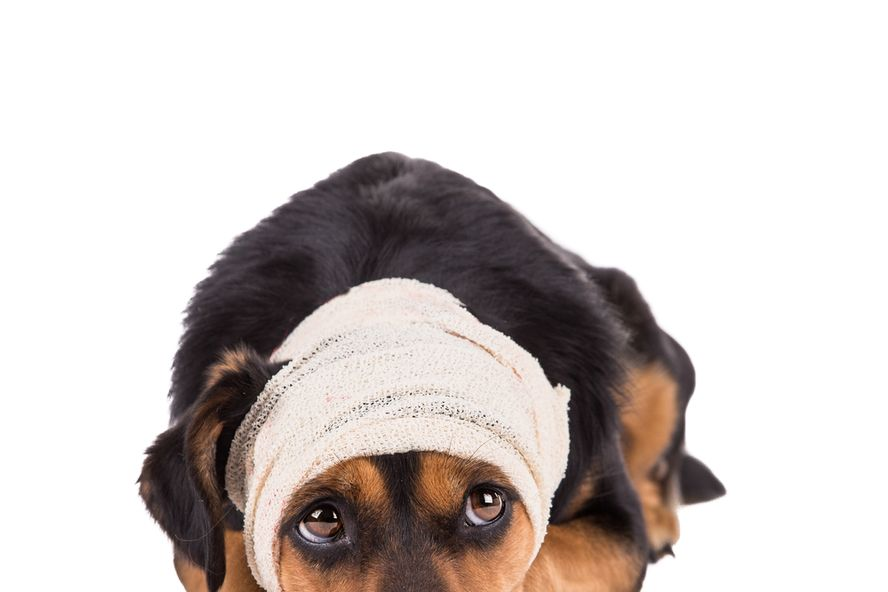 Brain Tumor in Dogs: Symptoms and Treatment Options