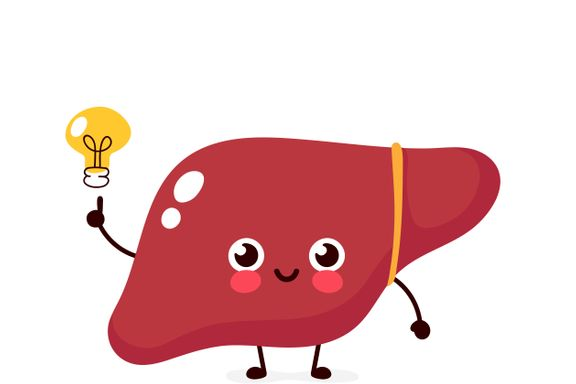Health Facts About the Liver
