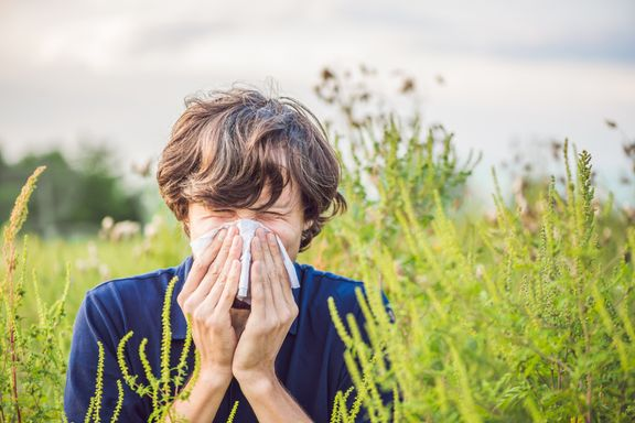 Most Common Allergies in Adults