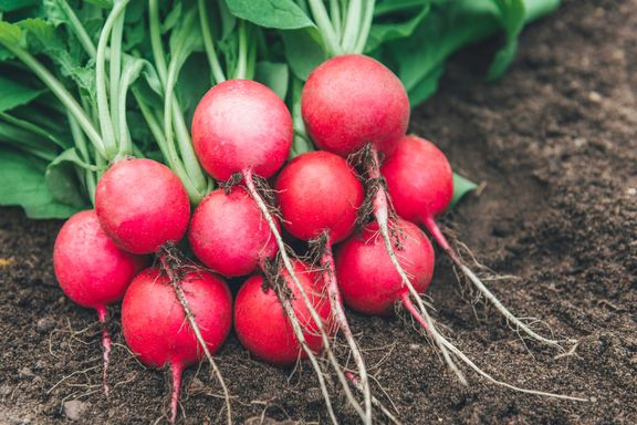 The Incredible Health Benefits of Radishes