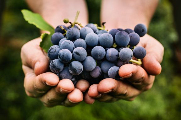The Incredible Health Benefits of Grapes