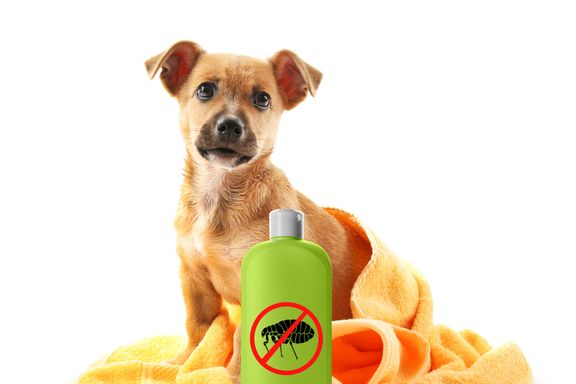 Signs That Your Dog May Have Fleas