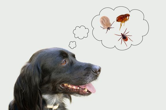 Fleas vs. Ticks: Similarities and Differences