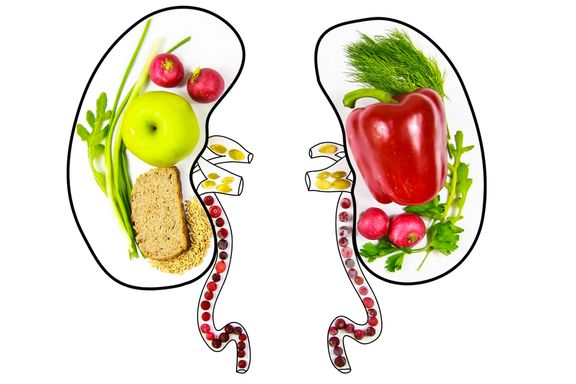 Foods Good For Your Kidneys